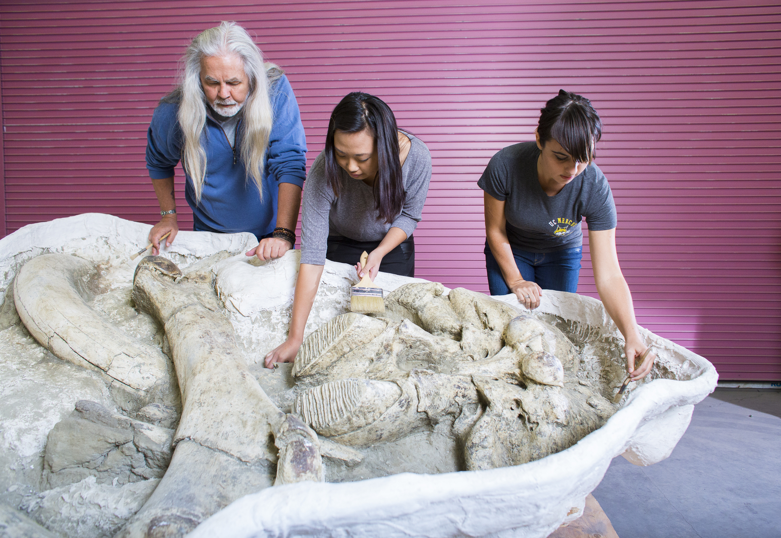 Researchers review mammoth bones